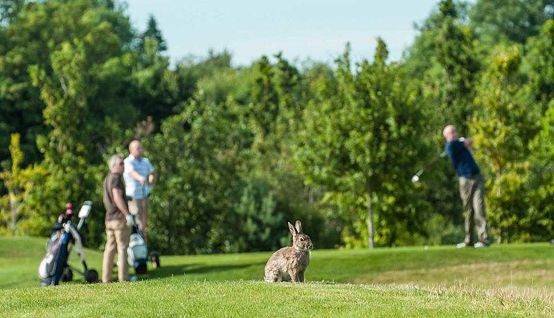 Castleknock Golf and Country Club bei Dublin / Golfreisen Irland