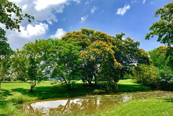 Royal Colombo Golf Club / Golfreisen Sri Lanka